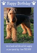 "Airedale Terrier-Happy Birthday - ""From The Dog"" Theme"